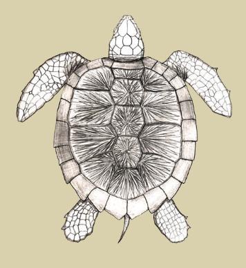 Big Brook Sea Turtle Page